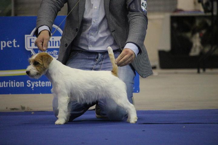Prossima cucciolata prevista Maggio