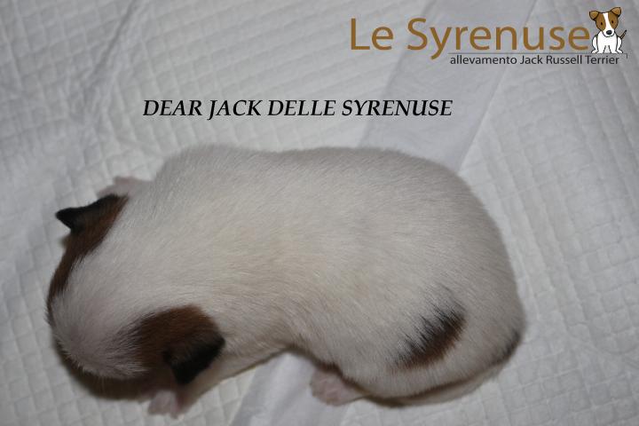 M1 Dear Jack Delle Syrenuse (consegnato 26\05\2016)
