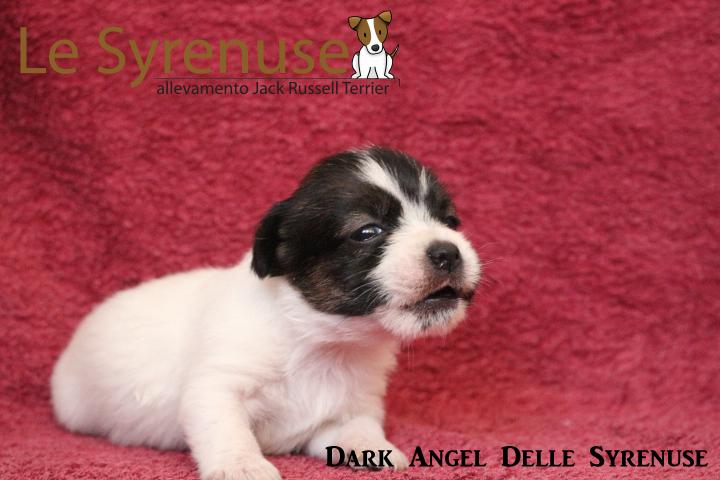 F2 Dark Angel Delle Syrenuse (consegnata 31\05\2016)