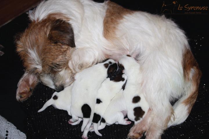 Cuccioli nati il 30\11\2016
