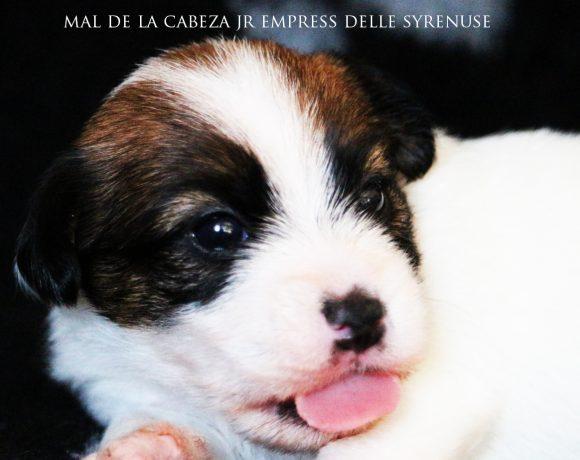 Femmina 2 Mal De La Cabeza Jr Empress delle Syrenuse