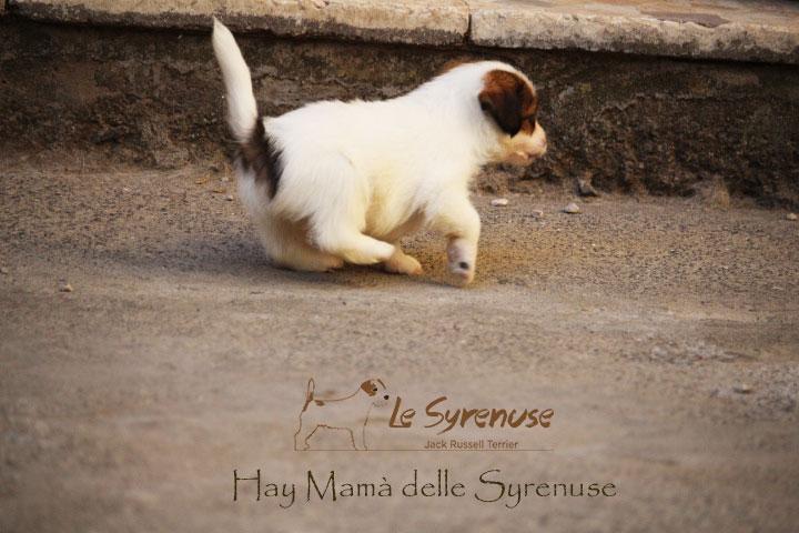 Femmina 1 –  Hay Mamà delle Syrenuse – CONSEGNATA
