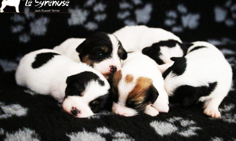 Prossima cucciolata prevista a Gennaio