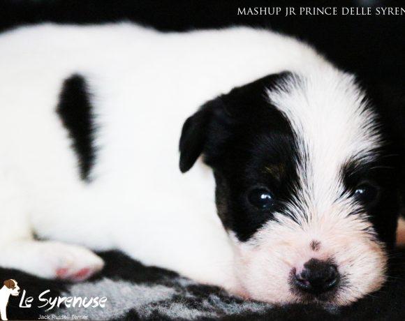 Maschio 2  Mashup Jr Prince delle Syrenuse
