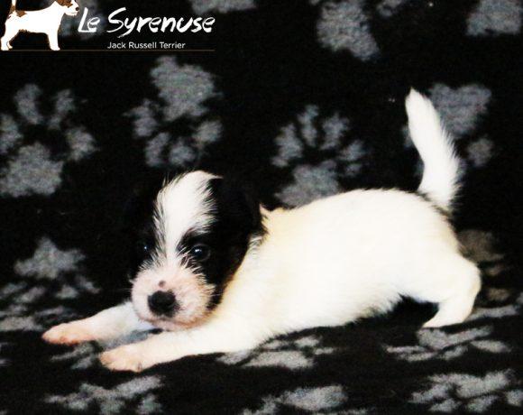 Maschio 2  Mashup Jr Prince delle Syrenuse – CONSEGNATO