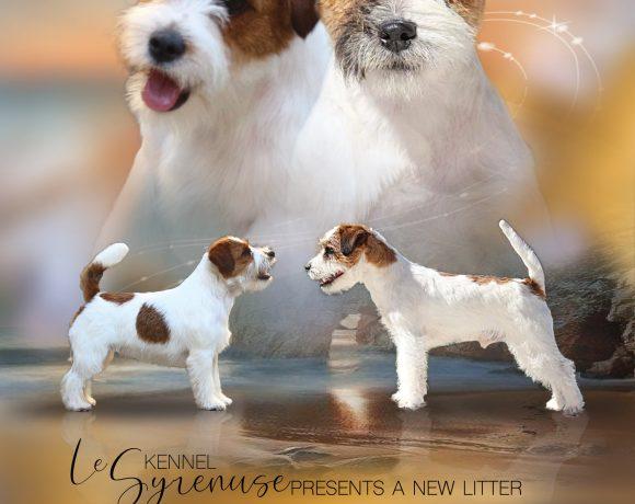 """Cuccioli nati il 22\01\2020 Litter """"R"""""""