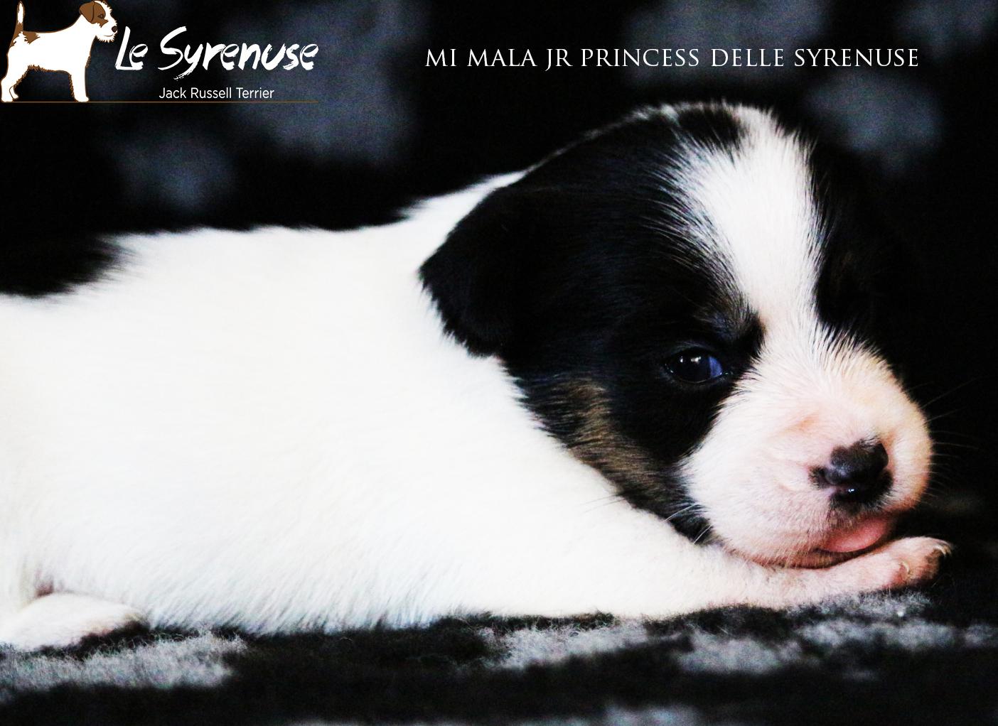 Femmina 3 Mi Mala Jr Princess delle Syrenuse